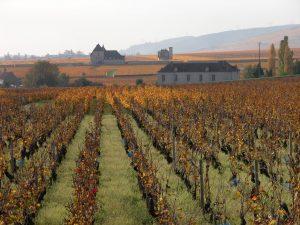 vue vignes bourgogne vougeot