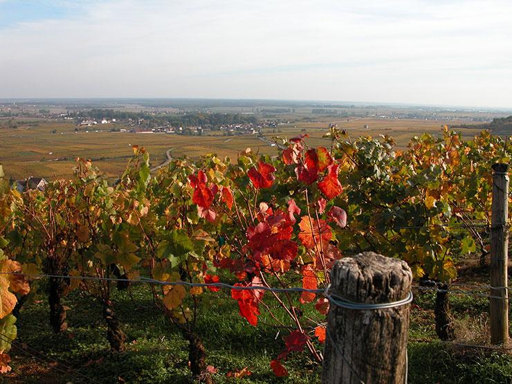 Les vignes en automne en Côte d'Or